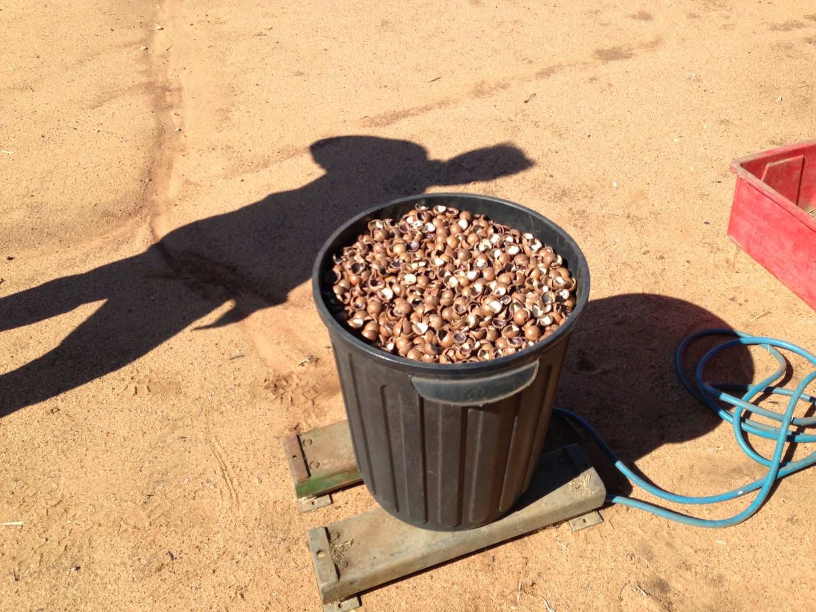 60 liter plastoc bucket full of macadamia nut shell on weigh scales.