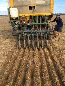 Small cone seeder planting wheat and biochar in biochar trials