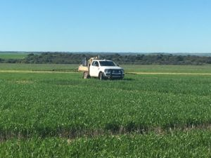 White ute spraying crops in biochar trial