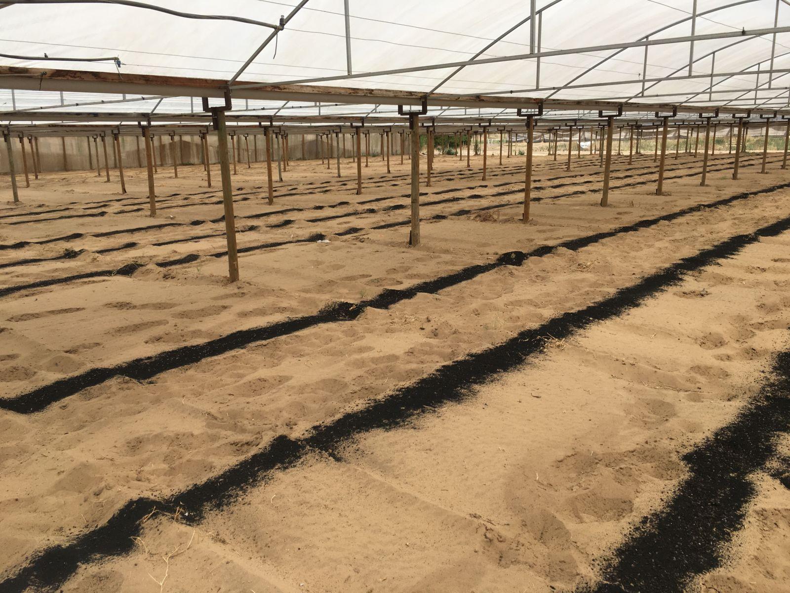 Biochar spread in rows in a greenhouse